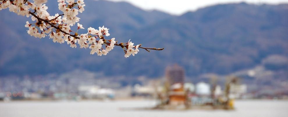 四月昇龍道:早晨松本城.諏訪湖小歇 (2007/04/18)